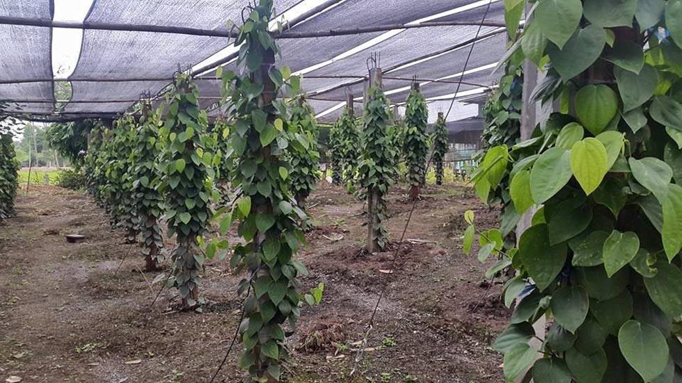 Lưới che nắng vườn ươm