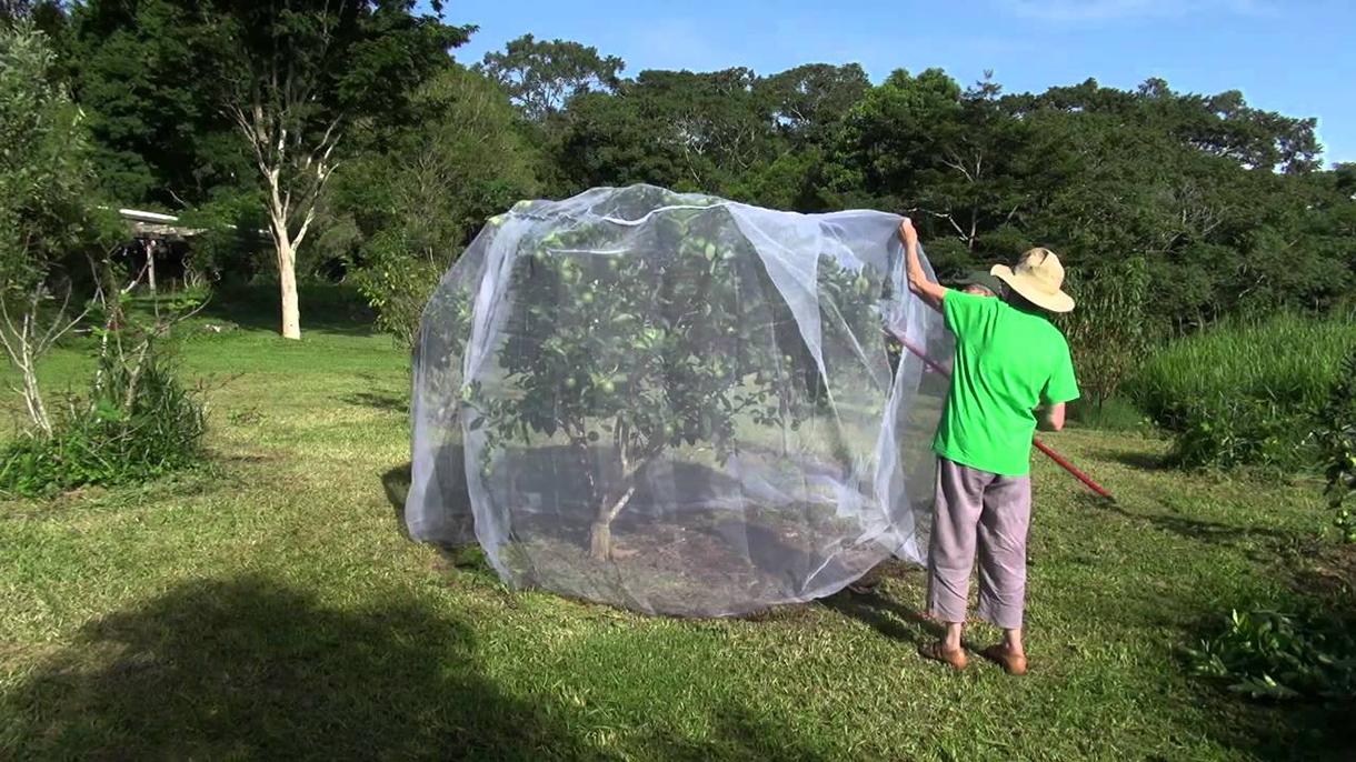 lưới chống côn trùng là gì