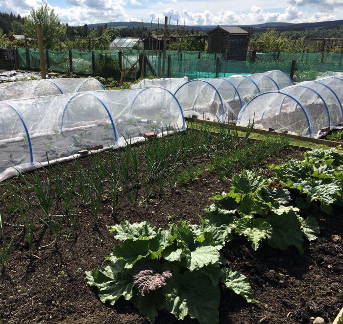 Giá bán lưới nhựa chống côn trùng 50mesh