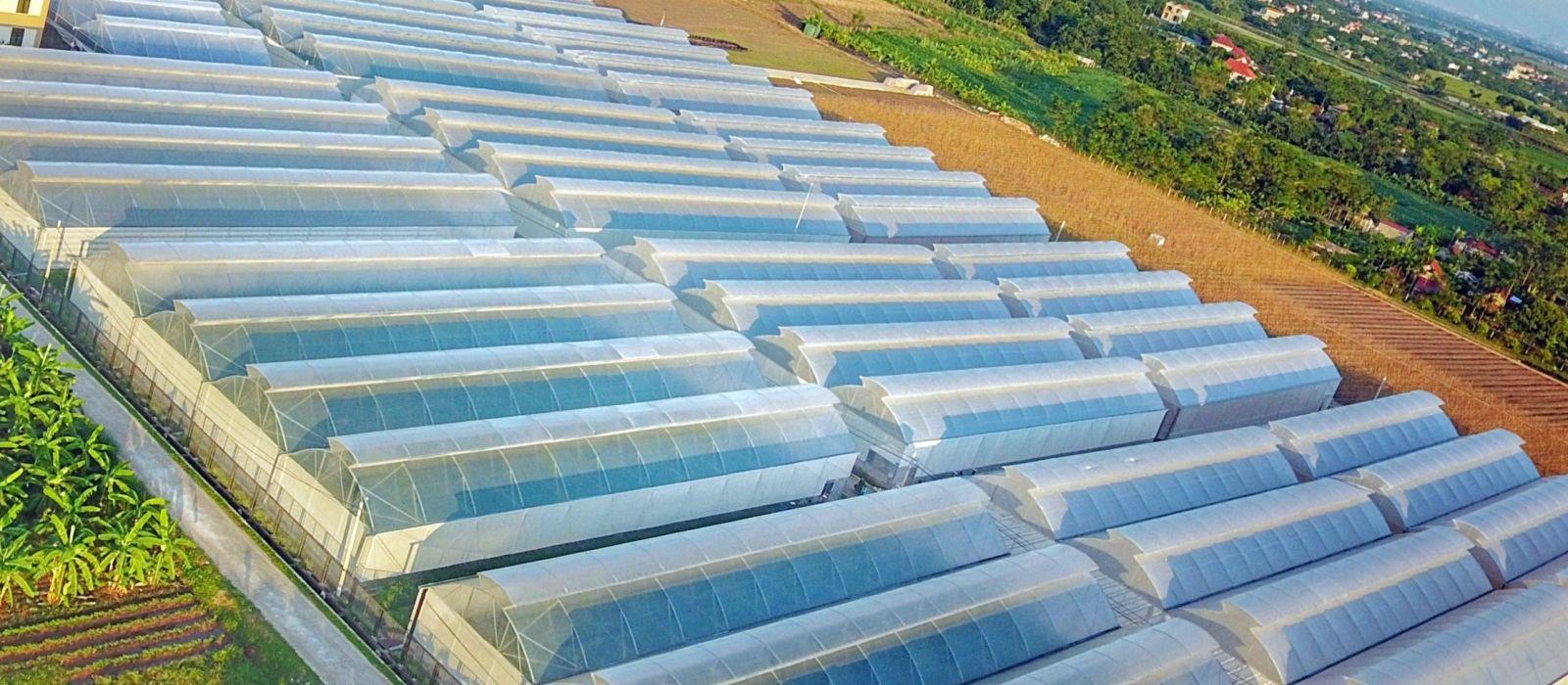 màng pe lợp nhà kính nông nghiệp kỹ thuật cao