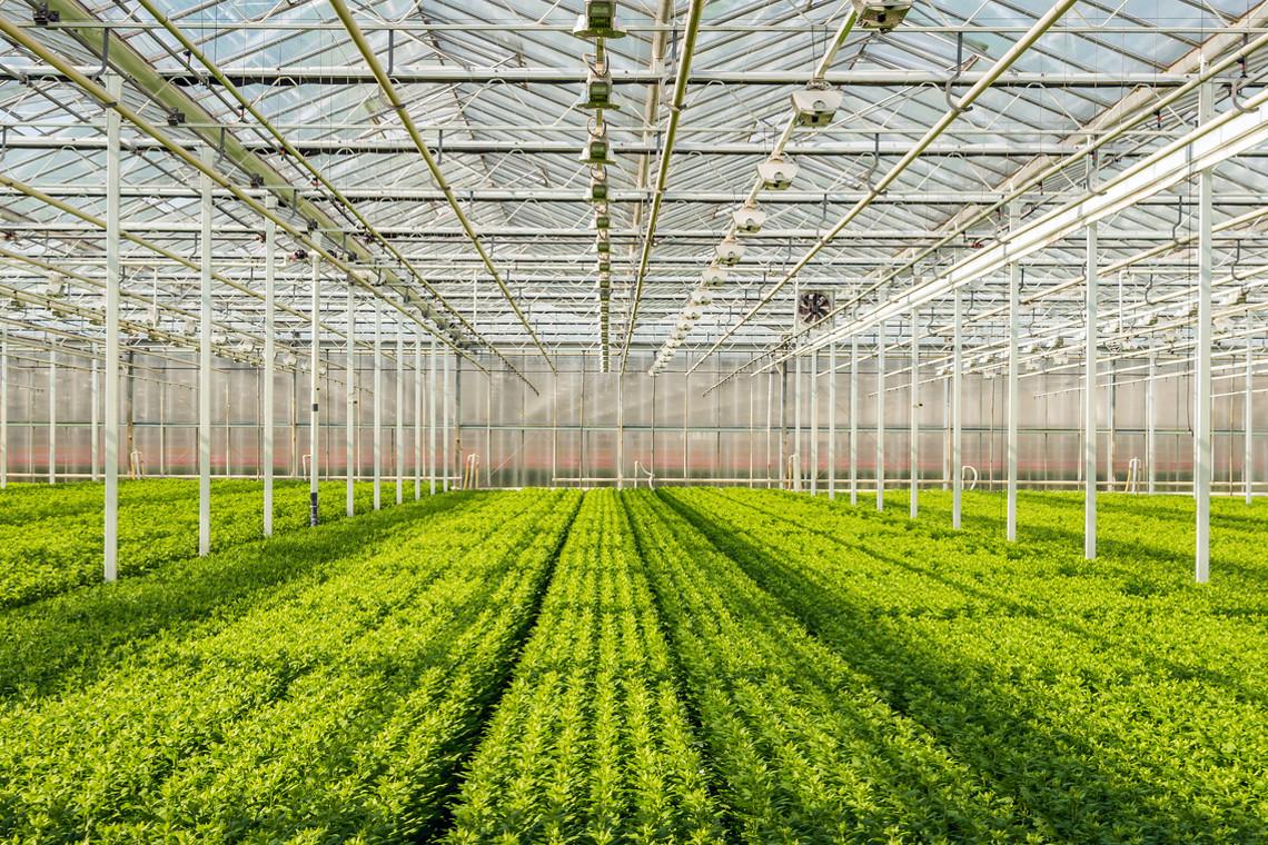 nhà kính trồng cây nông nghiệp