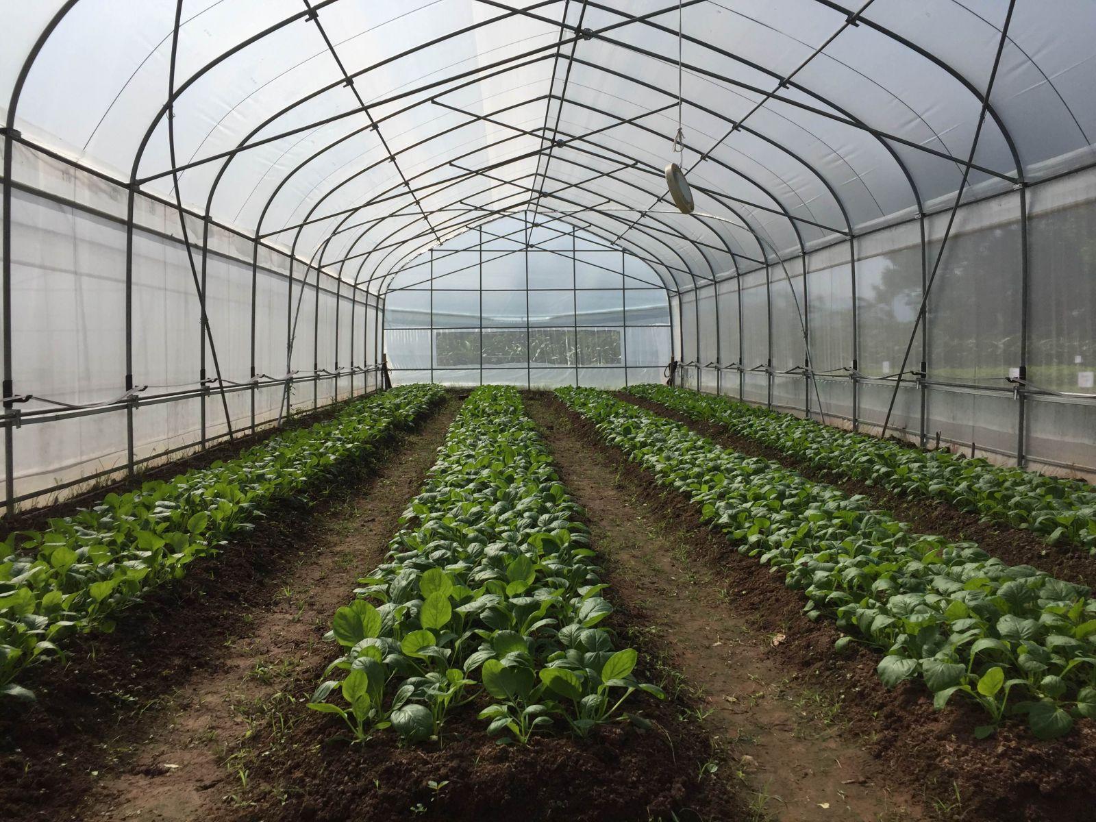 ưu điểm của màng nhà kính trồng rau