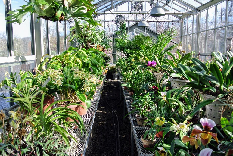 nhà kính trồng hoa lan bằng tấm poly đặc