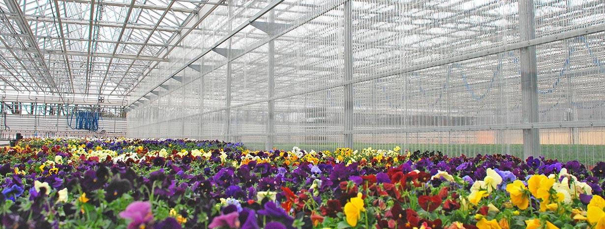 nhà kính polycarbonate trồng hoa