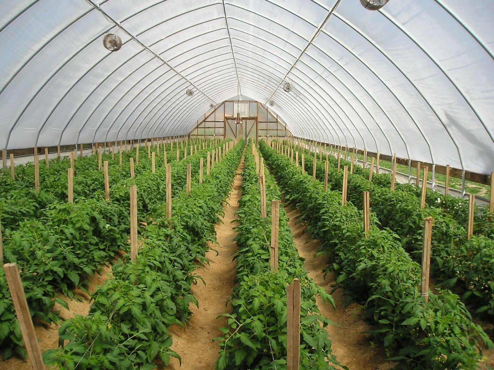 màng nhà kính trồng rau