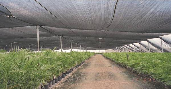 Lưới che nắng vườn ươm nông nghiệp có mấy loại? nên mua loại nào?