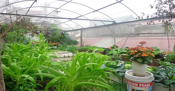 Cách làm nhà lưới trồng rau trên sân thượng từ lưới ngăn côn trùng