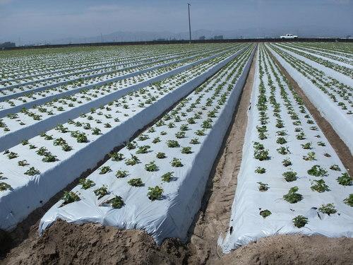 màng phủ nông nghiệp pe